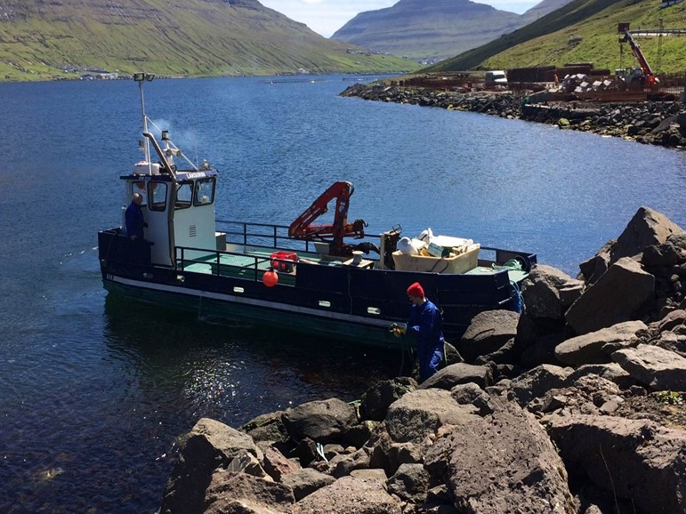 Faroese farming industry is cleaning the fjords