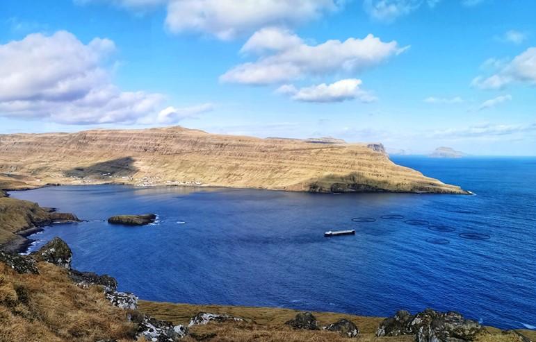 Bakkafrost releases smolt in Suðuroy